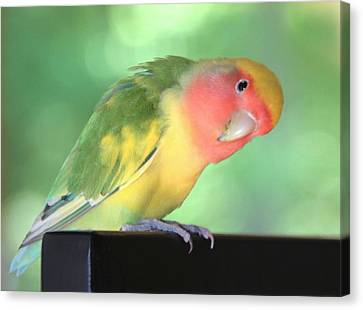 Peeking Peach Face Lovebird Canvas Print by Andrea Lazar