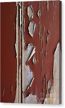 Peeling Paint Canvas Print by Carlos Caetano