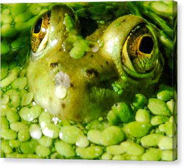 Peeping Through The Algae  Canvas Print by Optical Playground By MP Ray