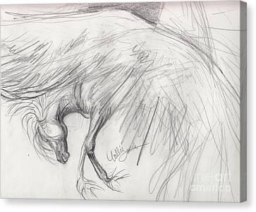Pegasus Sketch Canvas Print by Callie Smith