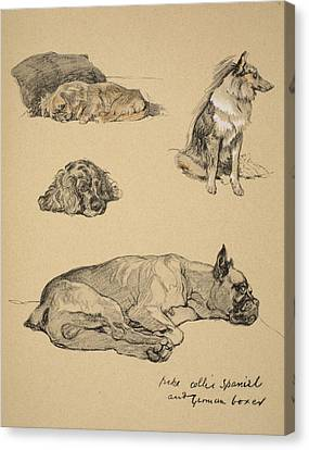 Boxer Canvas Print - Peke, Collie, Spaniel And German Boxer by Cecil Charles Windsor Aldin