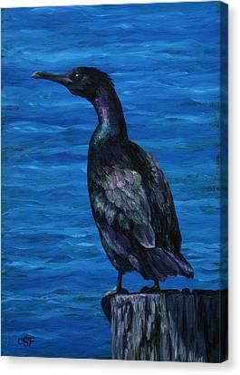 Pelagic Cormorant Canvas Print by Crista Forest