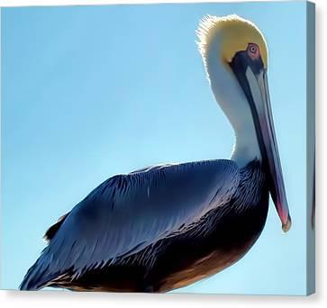 Canvas Print featuring the photograph Pelican 1 by Dawn Eshelman