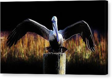 Pelican All Aglow Canvas Print by Paulette Thomas
