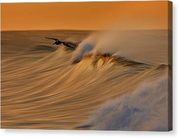 Canvas Print featuring the photograph Pelican And Wave  Mg_6950 by David Orias