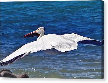 Canvas Print featuring the photograph Pelican At Pyramid Lake by Lula Adams