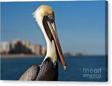 Canvas Print featuring the photograph Pelican by Barbara McMahon
