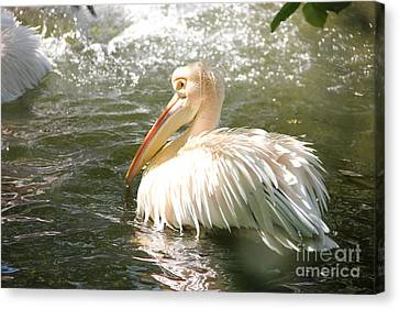 Pelican Bath Time Canvas Print