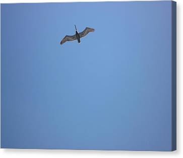 Canvas Print featuring the photograph Pelican by Bill Woodstock