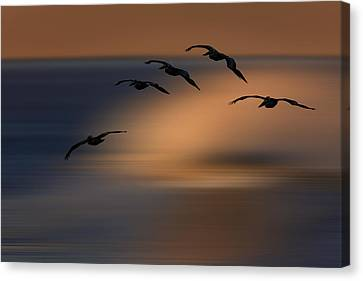Canvas Print featuring the photograph Pelican Blur  73a2324 by David Orias