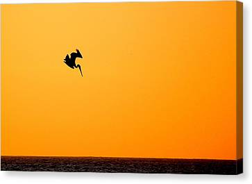 Canvas Print featuring the photograph Pelican Diving At Sunset by AJ  Schibig