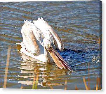 Canvas Print featuring the photograph Pelican Fishing by Lula Adams