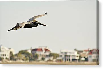 Pelican Flying Over Murrells Inlet Canvas Print by Paulette Thomas