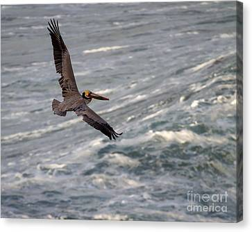 Canvas Print featuring the photograph Pelican Glide by Dale Nelson
