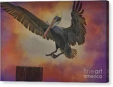 Pelican Grace Canvas Print by Deborah Benoit