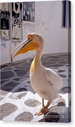 Pelican In Mykonos Town Canvas Print by George Atsametakis