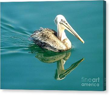 Canvas Print featuring the photograph Pelican In San Francisco Bay by Clare Bevan