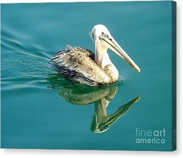 Pelican In San Francisco Bay Canvas Print by Clare Bevan