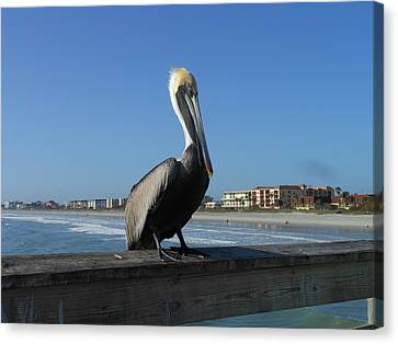 Canvas Print featuring the photograph Pelican  by Kay Gilley