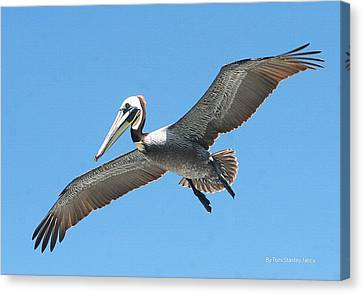 Canvas Print featuring the photograph Pelican Landing On  Pier by Tom Janca