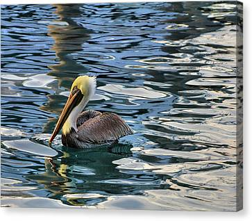 Pelican Monet Canvas Print by Debra and Dave Vanderlaan