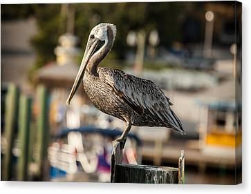 Pelican On A Pole Canvas Print by Paul Bartoszek