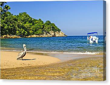 Pelican On Beach Canvas Print