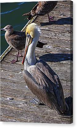 Pelican On Dock Canvas Print by Garry Gay