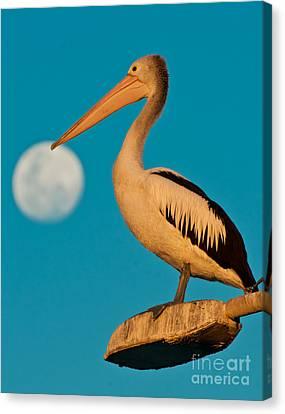 Pelican On Streetlights/ Full Moon Canvas Print