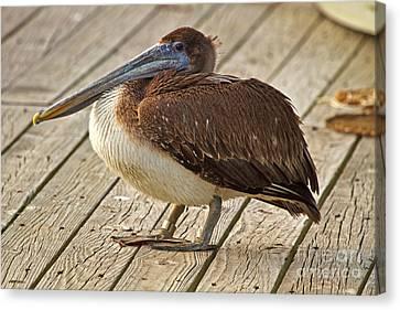 Pelican On The Dock II Canvas Print