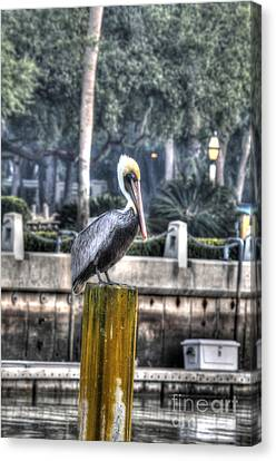 Pelican On Water Post Canvas Print by Dan Friend