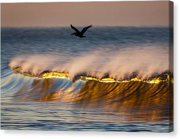 Pelican Over Wave  C6j9351 Canvas Print