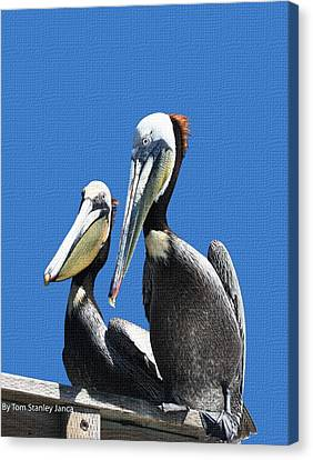 Canvas Print featuring the photograph Pelican Pair by Tom Janca