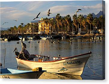 Canvas Print featuring the photograph Pelican Panga by Kandy Hurley