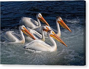 Kathleen Canvas Print - Pelican Parade by Kathleen Bishop