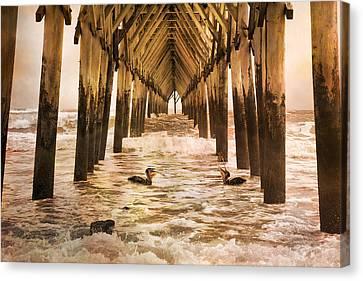 Pelican Paradise Canvas Print by Betsy Knapp