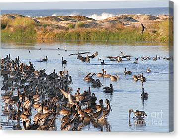 Canvas Print featuring the photograph Pelican Party by Bob and Jan Shriner