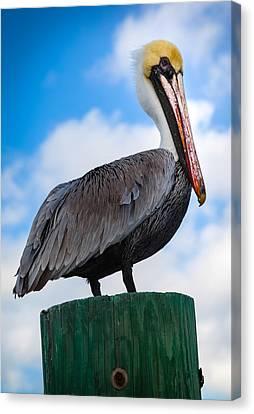 Pelican Perfect Canvas Print by Karen Wiles