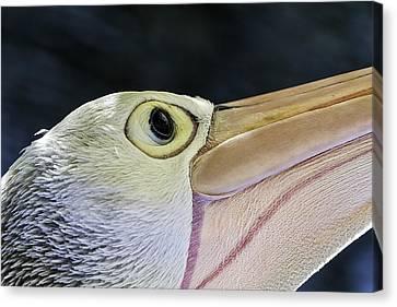 Pelican Portrait 2 Canvas Print by Mr Bennett Kent