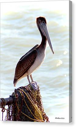 Pelican Portrait Canvas Print by Dick Botkin