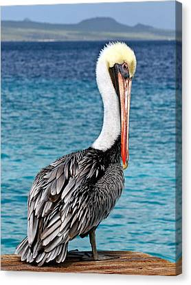 Pelican Portrait Canvas Print by Jean Noren