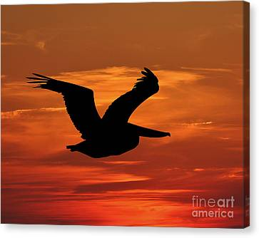 Pelican Profile Canvas Print by Al Powell Photography USA