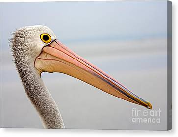 Pelican Profile Canvas Print by Mike  Dawson