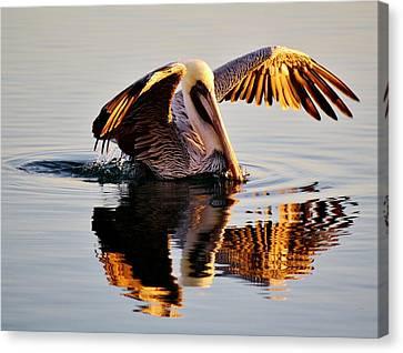 Pelican Reflection Canvas Print by Paulette Thomas