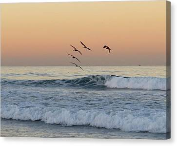 Pelican Series 2 Canvas Print