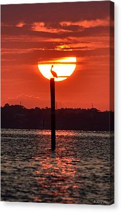 Pelican Silhouette Sunrise On Sound Canvas Print by Jeff at JSJ Photography