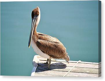 Pelican - Sitting On The Dock Of The Bay Canvas Print by Paulette Thomas
