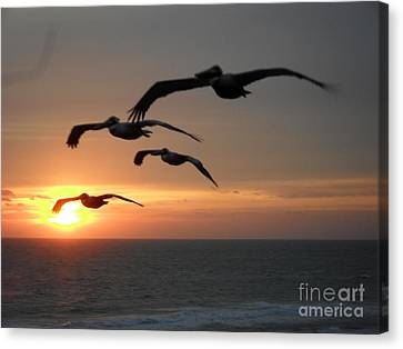 Canvas Print featuring the photograph Pelican Sun Up by Laurie Lundquist