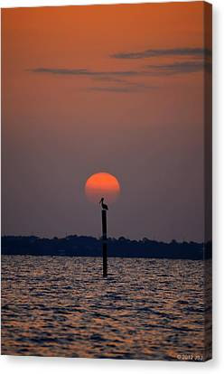 Pelican Sunrise Silhouette On Sound Canvas Print by Jeff at JSJ Photography