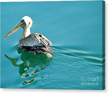 Canvas Print featuring the photograph Pelican Swimming by Clare Bevan
